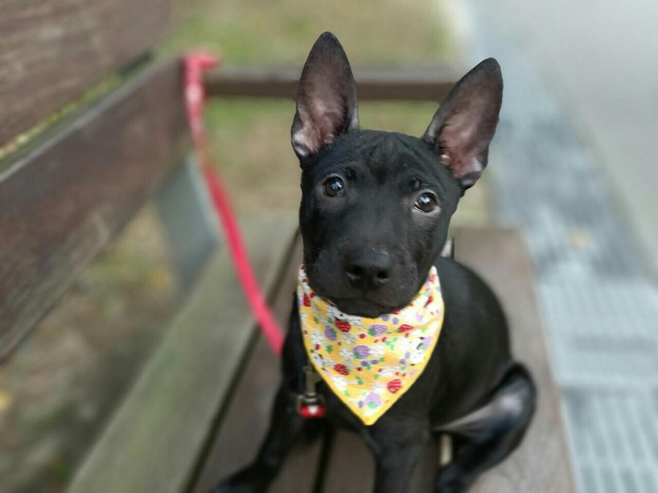 Second Chance In Life Foundation is a non-profit organization based in Vancouver BC that aims at finding loving homes for rescued animals. Visit our adoption gallery to adopt a pet and give him/her a second chance in life.