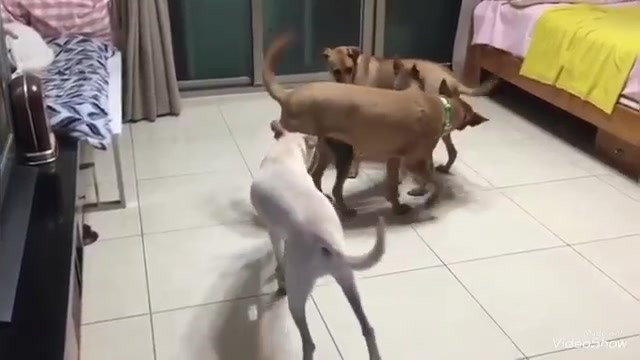 Hamburger plays with a puppy he met for