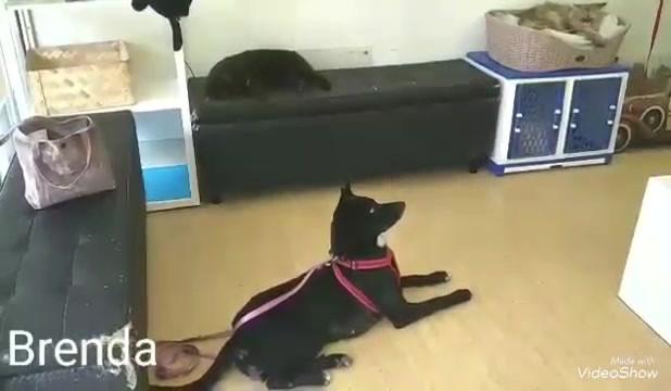 Brenda observing cats .mp4