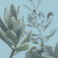 Gros plan de plantes succulentes