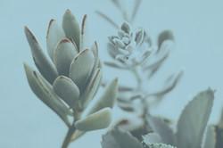 Nahaufnahme von saftigen Pflanzen