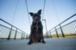 Govind Dogs (47).jpg