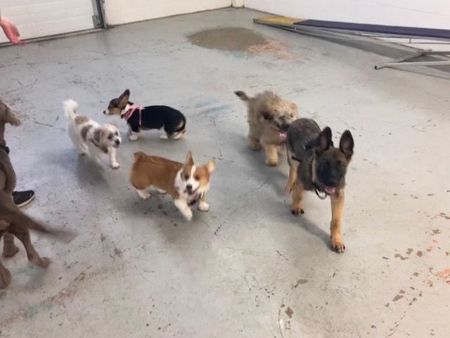 Fergus & Friends Puppy Social!!