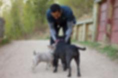 Govind Dogs (29).jpg