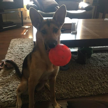 Sofi's new treat ball!