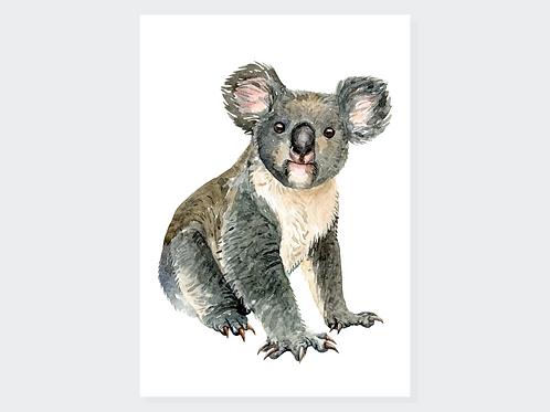 Adorable koala