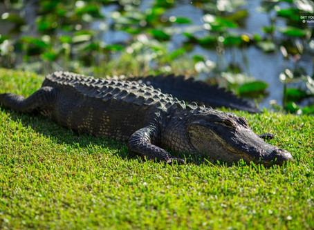 Florida's National Park