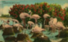 flamingos-postcard.jpg