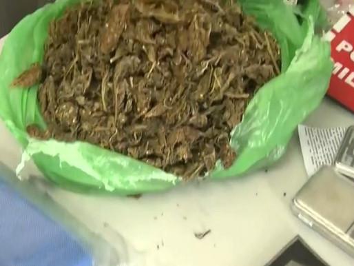 Homem é preso ao receber drogas pelos Correios na Paraíba