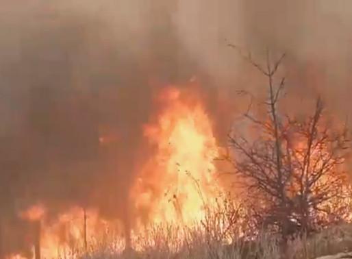 Corpo de Bombeiros lança Operação Queimadas para prevenir incêndios em matas no Sertão do Estado