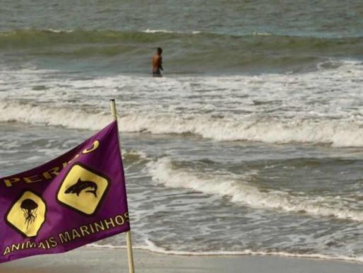 Novo ataque de tubarão é registrado nas praias de Recife