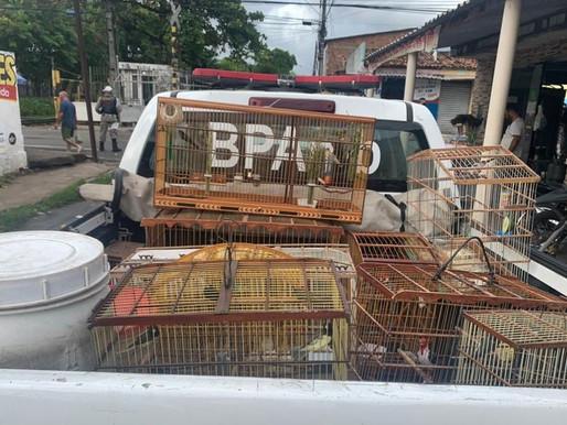 Operação da PM prende líder de facção criminosa e apreende carro luxuoso e aves silvestres