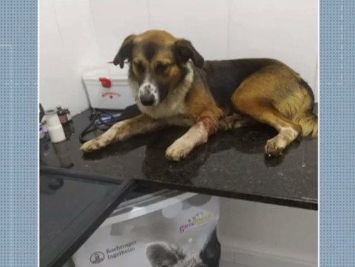 Homem é preso em flagrante, após atirar em cachorro no Sertão da Paraíba