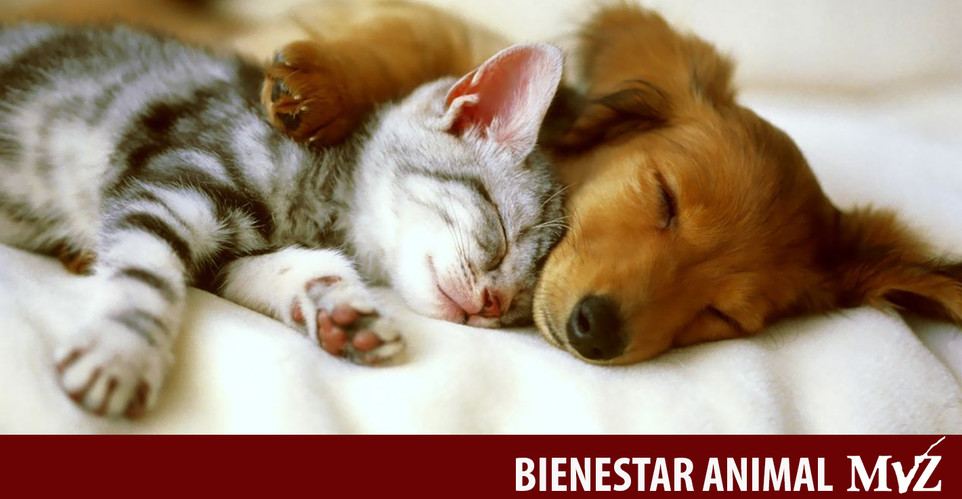 perro y gato (1).jpg