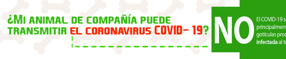 BANNER PAG COVID 2_2.png