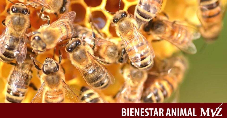 abejas (1).jpg