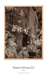 Elephant Glimpse2.0.jpg