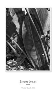 BananaLeaves.jpg