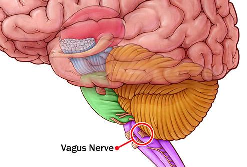 Problemas digestivos nervo vago