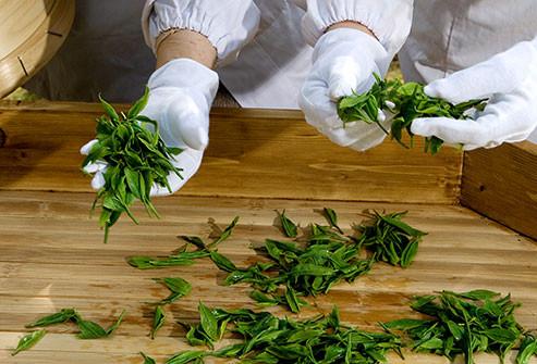 Matcha um tipo de chá verde folhas