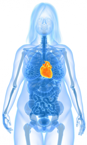 Mulher obesa e doença do coração
