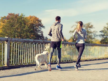 A posse de animais de estimação - especialmente cães - ajuda pacientes cardíacos a gerenciar seus fa