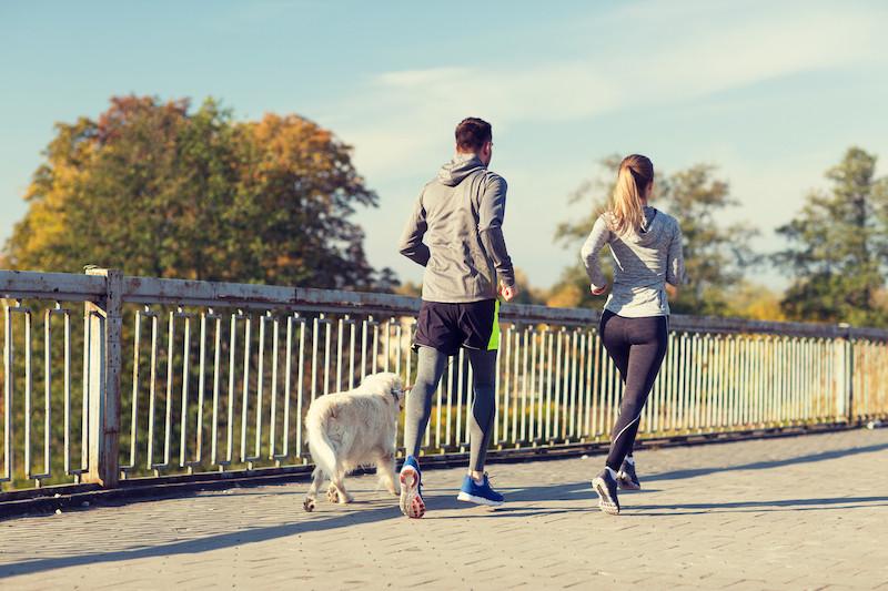 passear com cachorro beneficia a saúde do coração