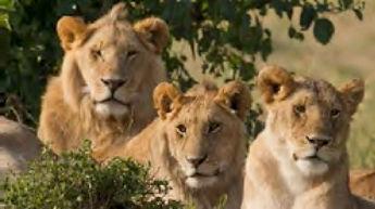 Lion Park.jpg