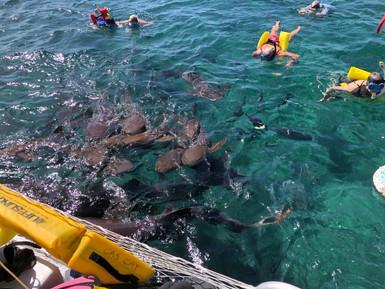 Nurse Sharks Feeding.jpg