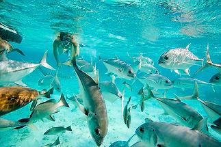 Hol-Chan-Marine-Reserve-Belize.jpg