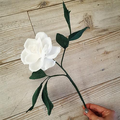 White Gardenia Branch