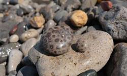 pet.17.petoskey stones_0
