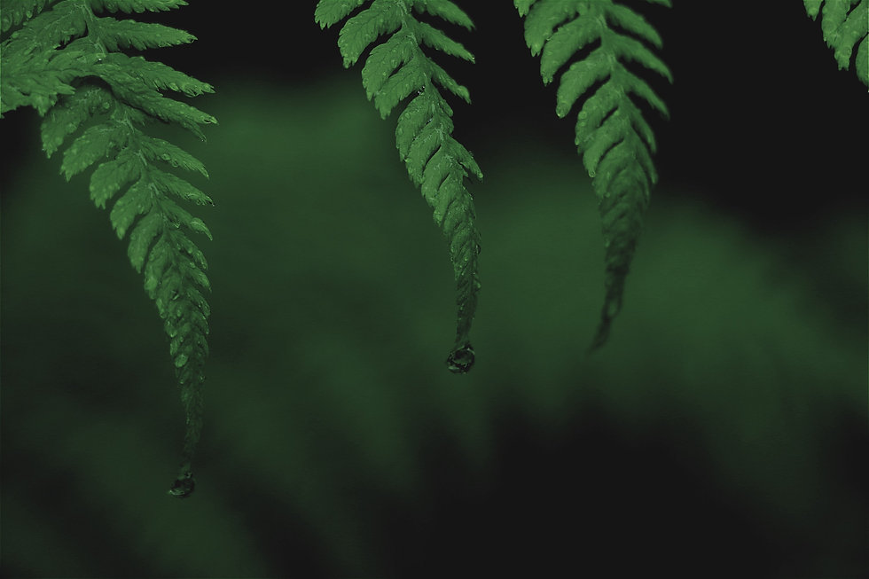 chris-petrow-OkJVWSuhdic-unsplash_edited