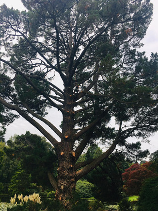 Essential health and safety works at Sheffield Park and Gardens