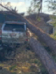 fallen tree removal auto.jpeg