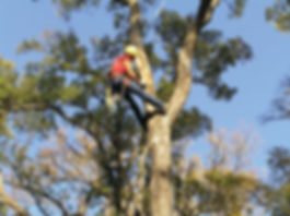 tree trimming safety.jpg