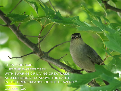 Notecards: Let the Birds Fly - Genesis 1:20