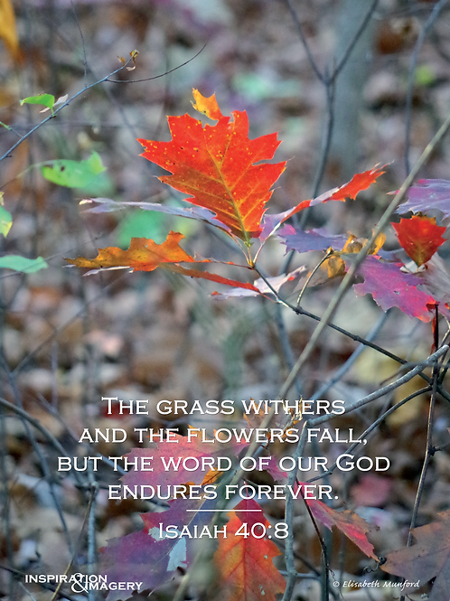 Notecards: Fall in Clarke County with Isaiah 40:8