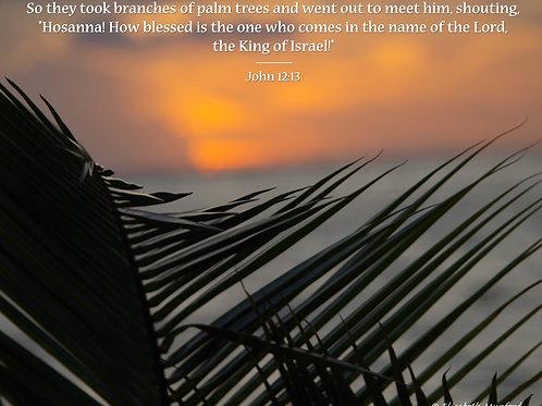 Notecards: Hosanna - John 12:13