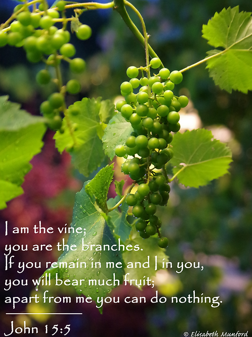 Notecards: He is the Vine - John 15:5