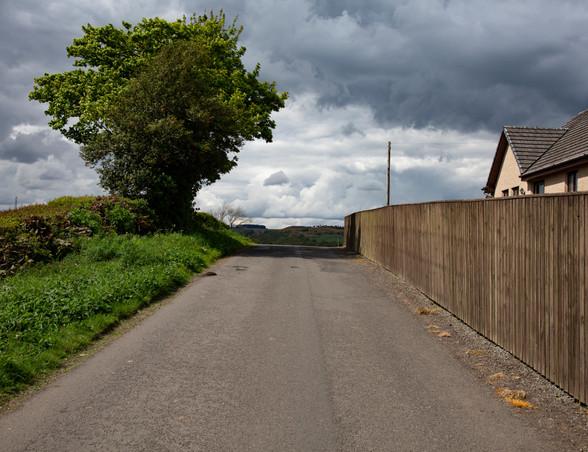 overspill | denny | back roads tree