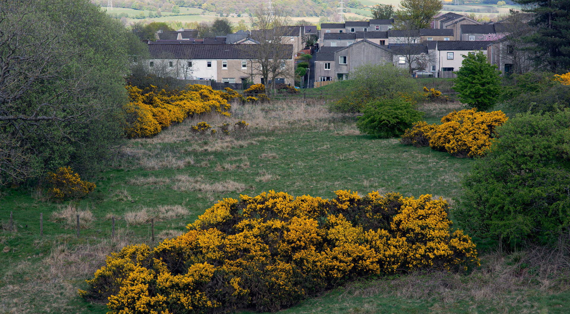 overspill | denny | braes view