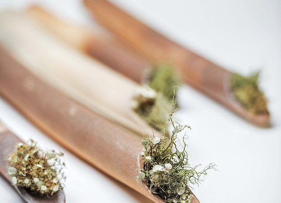 tubo vegetal