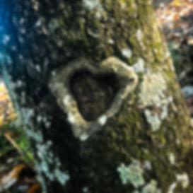 Heart on Tree Bark