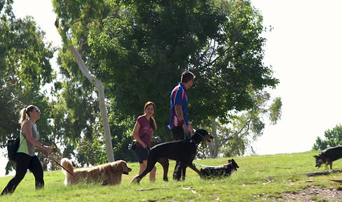 Pack Walks on Saturday with George The Dog Trainer