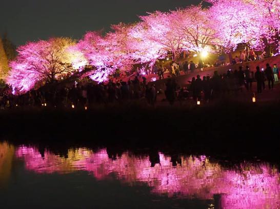 【お花見人気スポット水面桜】