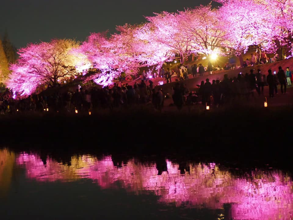 The cherry blossoms in the water