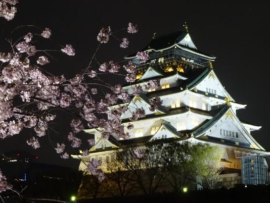【大阪城「西の丸庭園」の夜桜】
