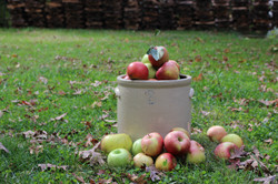 Fall-Picked Apples