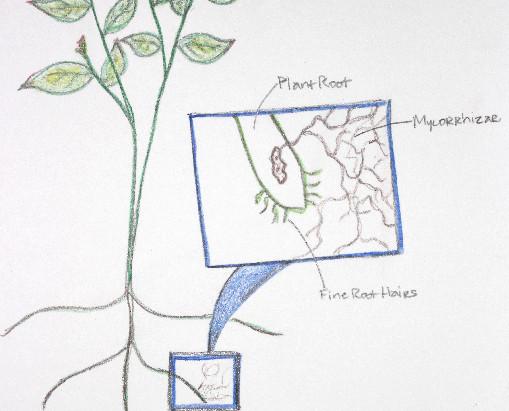 On Perennial Gardening and Amazing Fungi